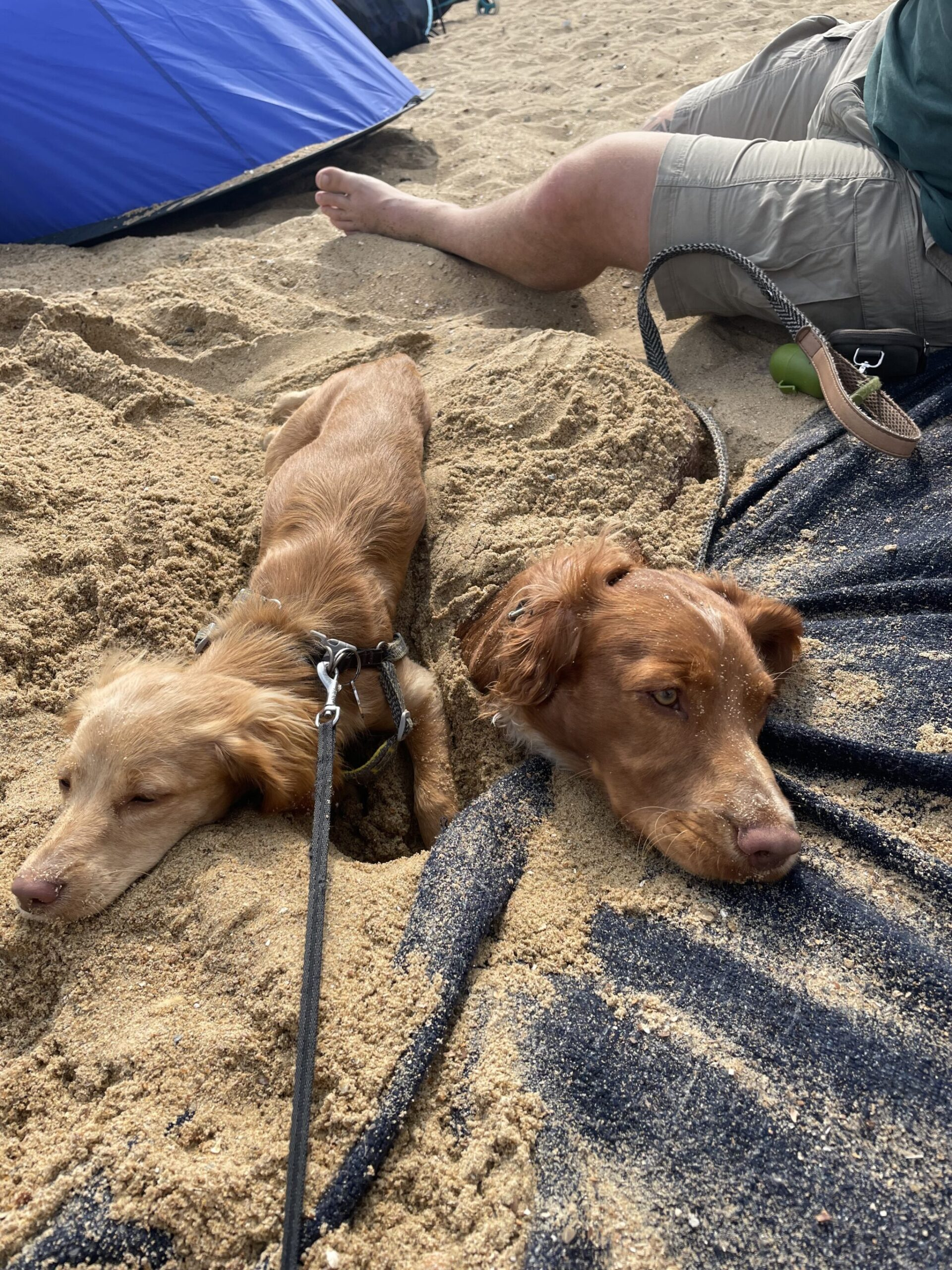 puppies in the sand